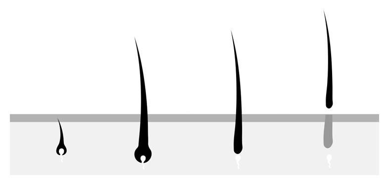 normales Wimpernwachstum